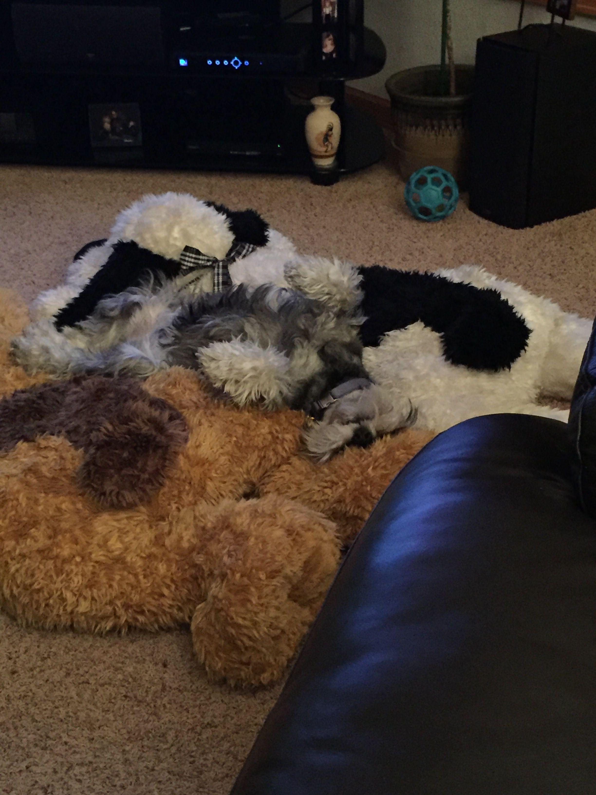 Dog sleeping on dog...
