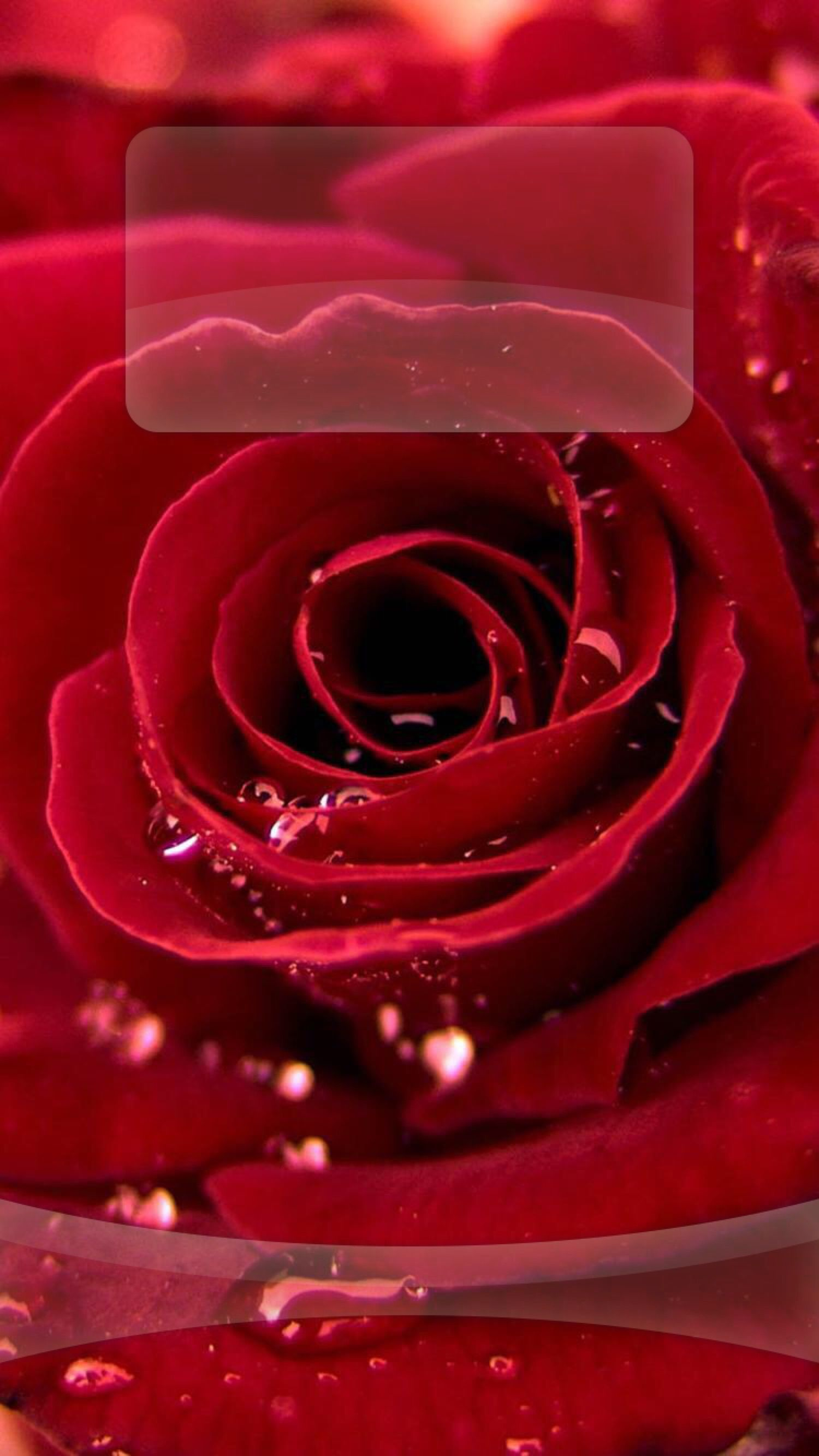 Tap And Get The Free App Lockscreens Art Creative Rose Drops Water Red Flower Hd Iphone 6 Lock Screen With Images Single Red Rose Wallpaper