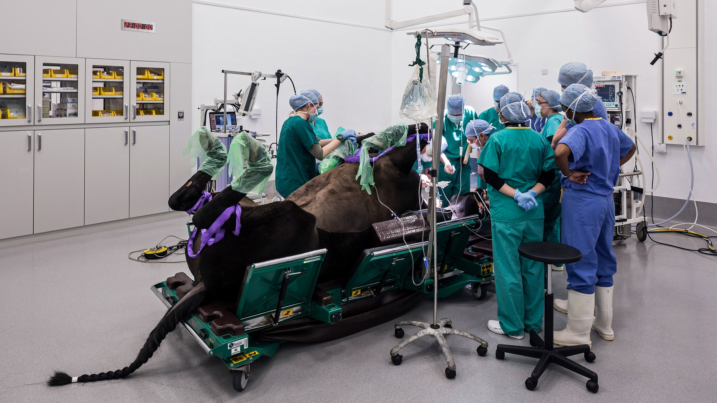 Fourlegged patients should feel right at home at
