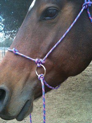 Life And Horses Diy Bitless Bridle Part 3 Caballos Ecuestre