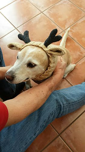 Knitted Dog Hats With Ears Easy Free Patterns Free Pattern