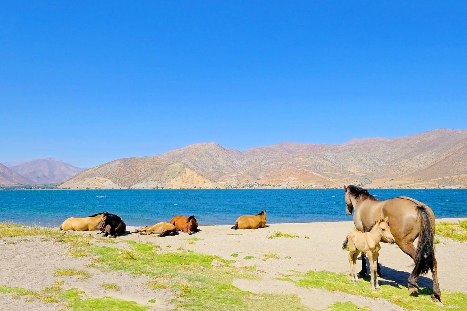 Visit Puclaro Dam Dam, Artificial lake, Elqui valley