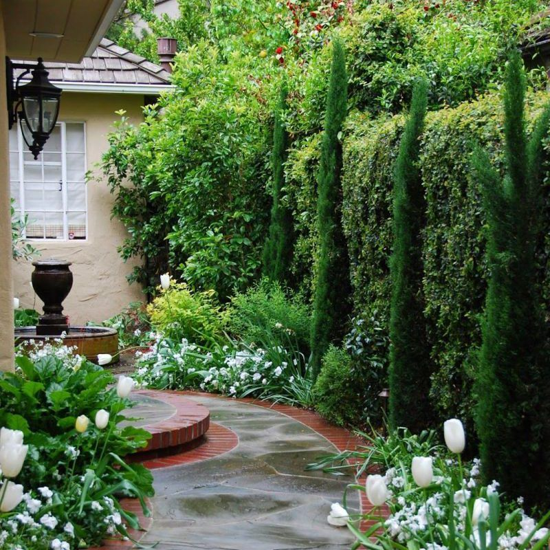 Planting For Privacy Grow Beautifully Privacy Landscaping Privacy Plants Backyard Garden Landscape