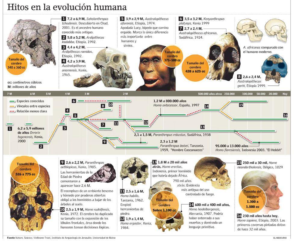 Pequeño Resumen A Modo De Esquema De La Evolución Evolución Humana Evolucion Del Hombre Historia De La Tierra