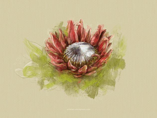 King Protea Wallpaper Free Download Protea Art Flower Painting Protea