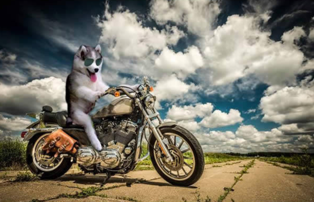 These Photoshop Geniuses Are Turning Mr Bean Into The Most Random - Adorably optimistic possum sparks hilarious photoshop battle