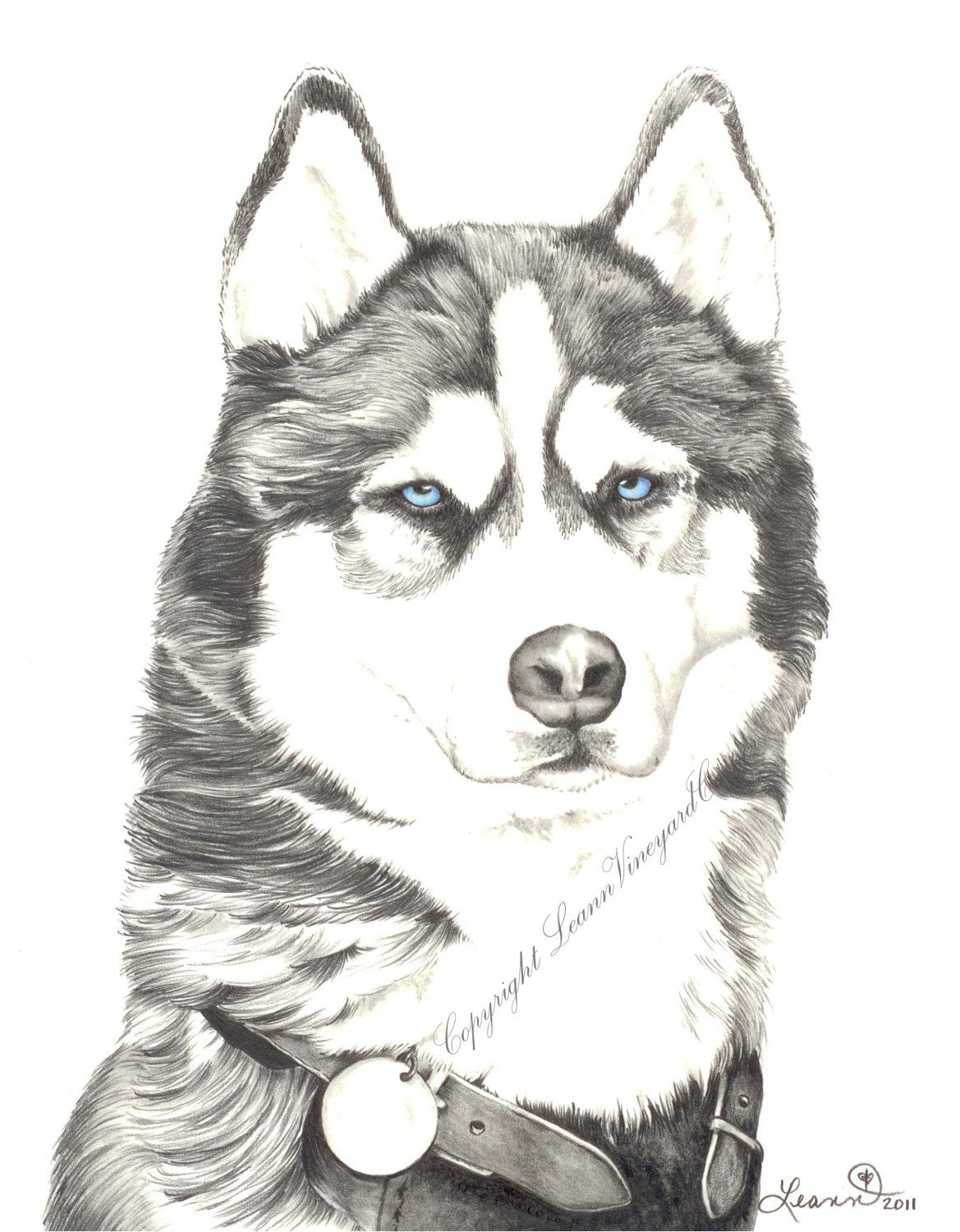 Drawing of a Siberian Husky, print - Husky. $20.00, via Etsy. | Art ...