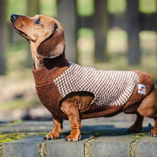 Dachshund Gloucester Sleeveless Tweed Jumper By Redhound For Dogs