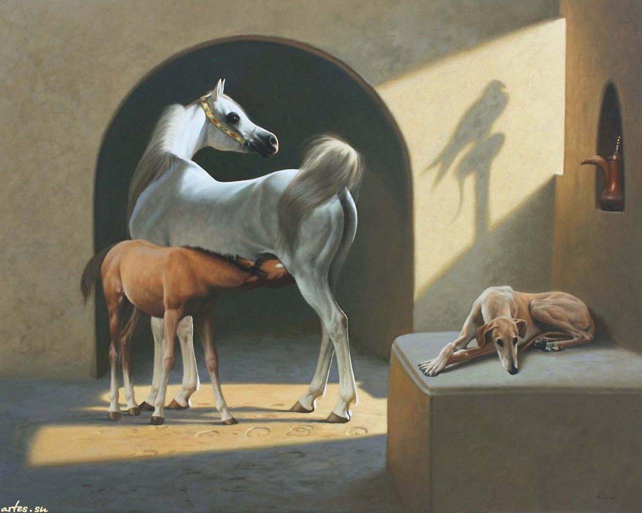 картинки с лошадьми и кошками