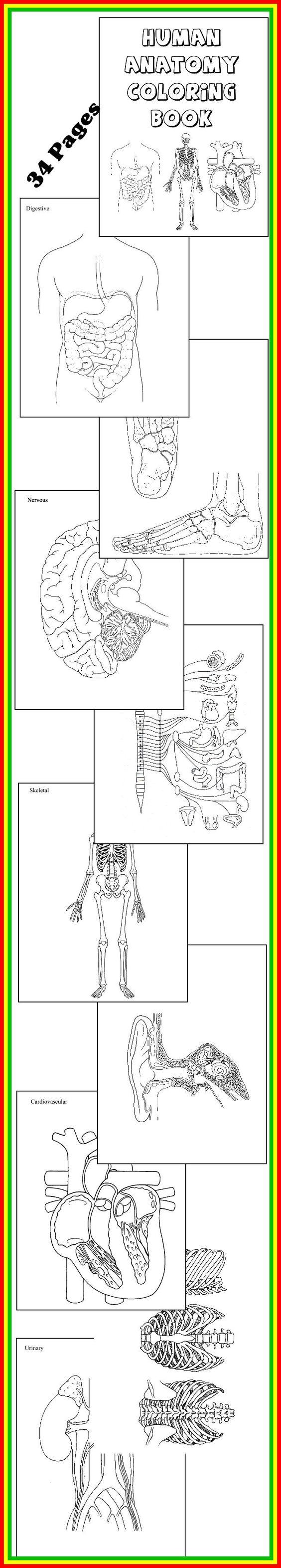 Science Download Human Anatomy Coloring Book 32 Diagrams To