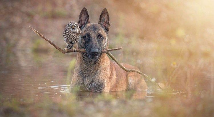 Dog and Hoo
