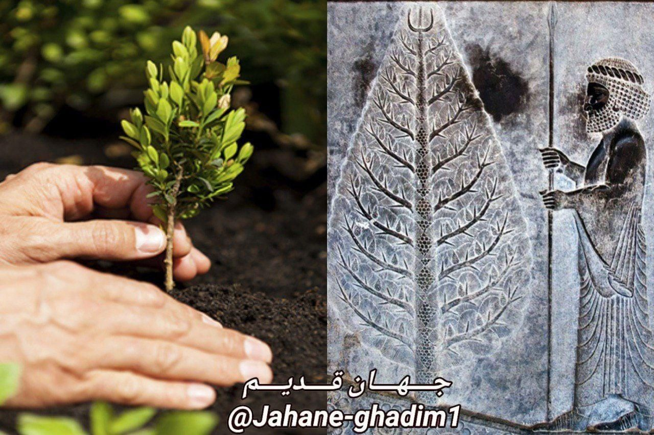 کاشتن درخت از دوران باستان در ایران رواج داشت چنانکه هر فرد زمانی که فرزندی به دنیا می آورد موظف بو