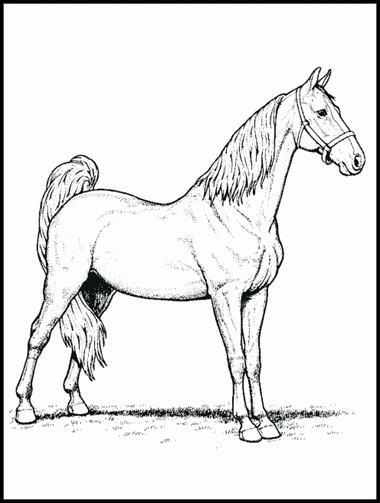 Easyfire Horse Designs for Kids Coloring Pages in 2020