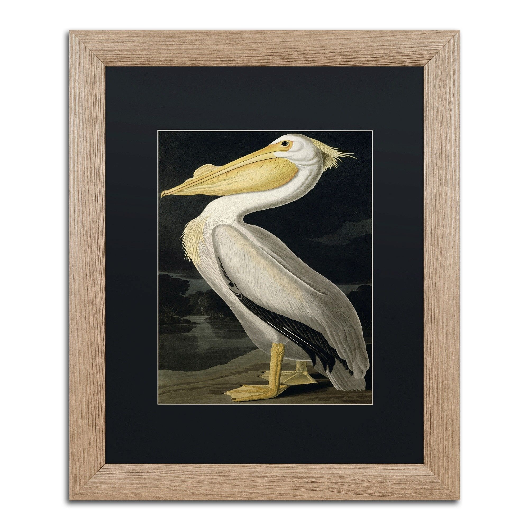 American white pelican by john james audubon framed painting print