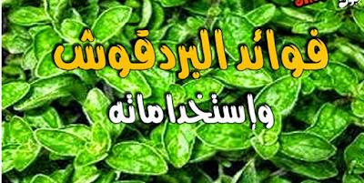 فوائد عشبة البردقوش الطبية والعلاجية والغذائية Herbs Blog Posts Vegetables