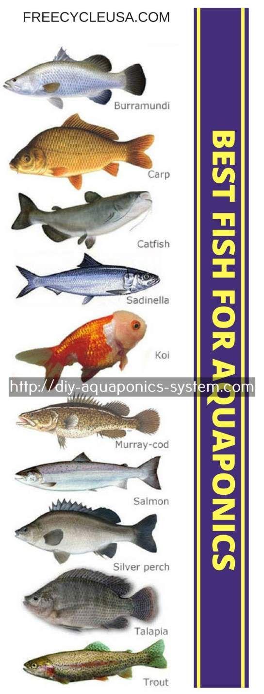 Aquaponics manual pdf