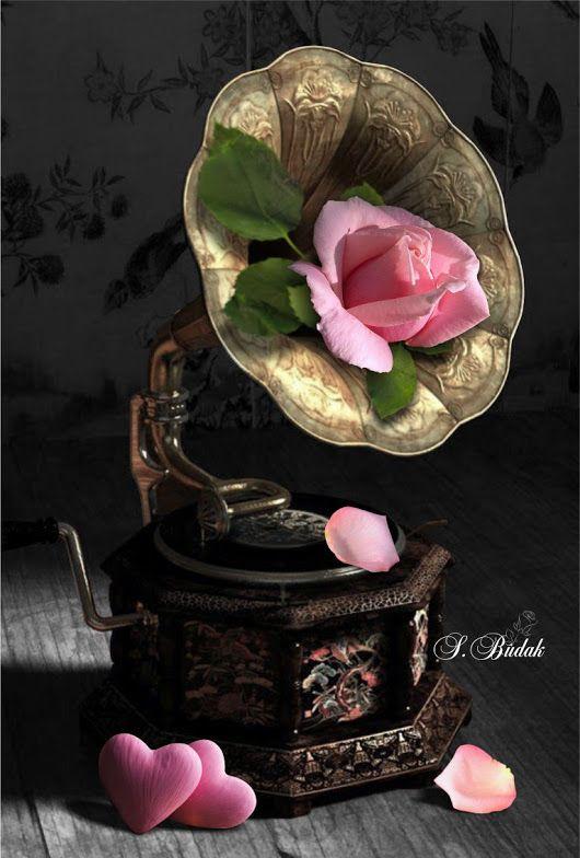 Sabri Budak Toque De Color Corazones Rosados Rosas