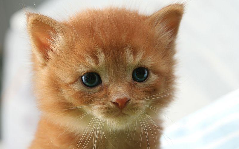 Girl Cat Names 250 Female Cat Names You Will Love By Girl Cat Names Cute Cat Names Baby Cats
