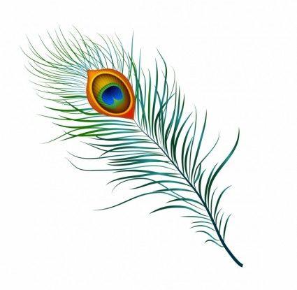Peacock Feather Free Vector In Adobe Illustrator Ai Ai Encapsulated Postscript Eps Eps Format For Free Feather Clip Art Art Peacock Feather Drawing