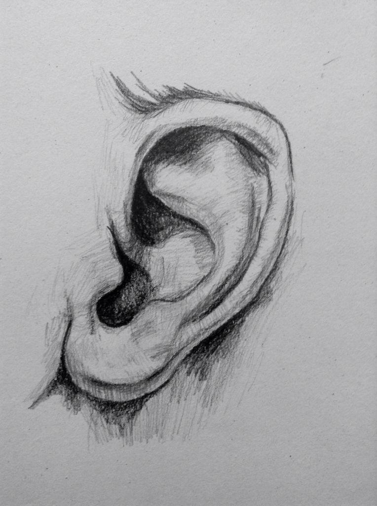 Pin By Jordan Hernandez On Drawing How To Draw Ears Pencil Art Drawings Realistic Drawings