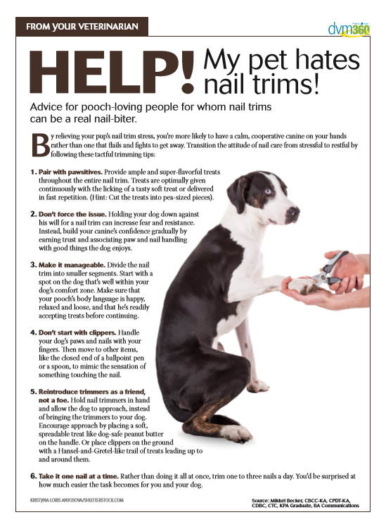 Ease Your Pet Into Nail Trims Animal Hospital Pet Clinic