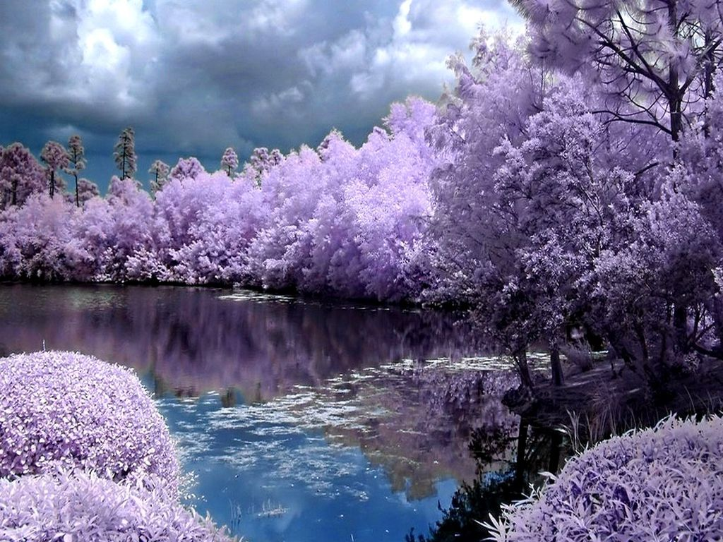 Spring Screensavers Backgrounds Ventube Purple Spring New