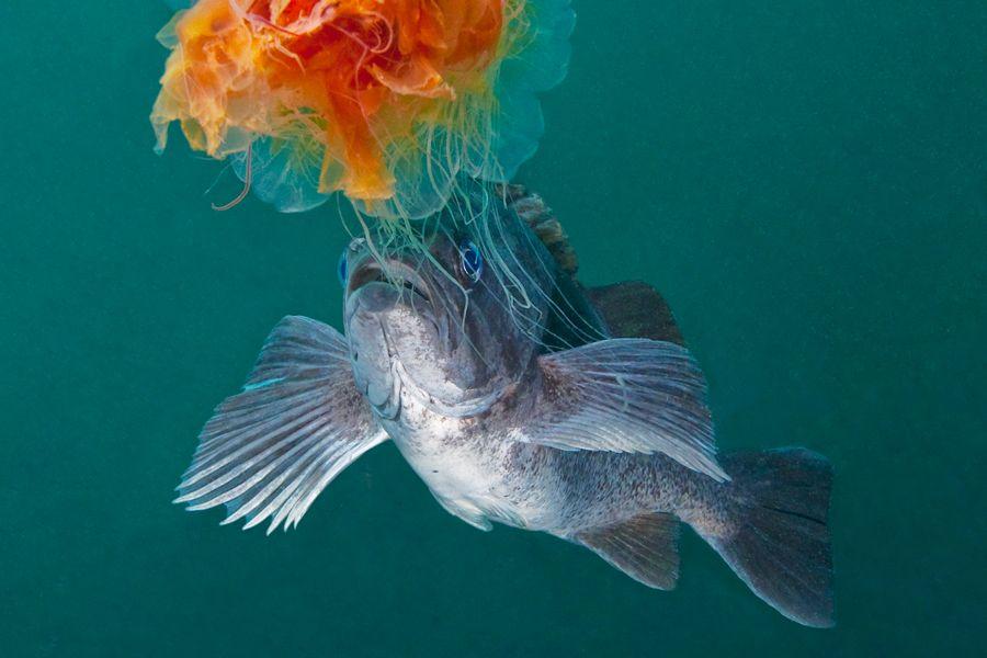 Underwater World: Strange Beauties of the Sea - July/August 2012 - Sierra Magazine - Sierra Club
