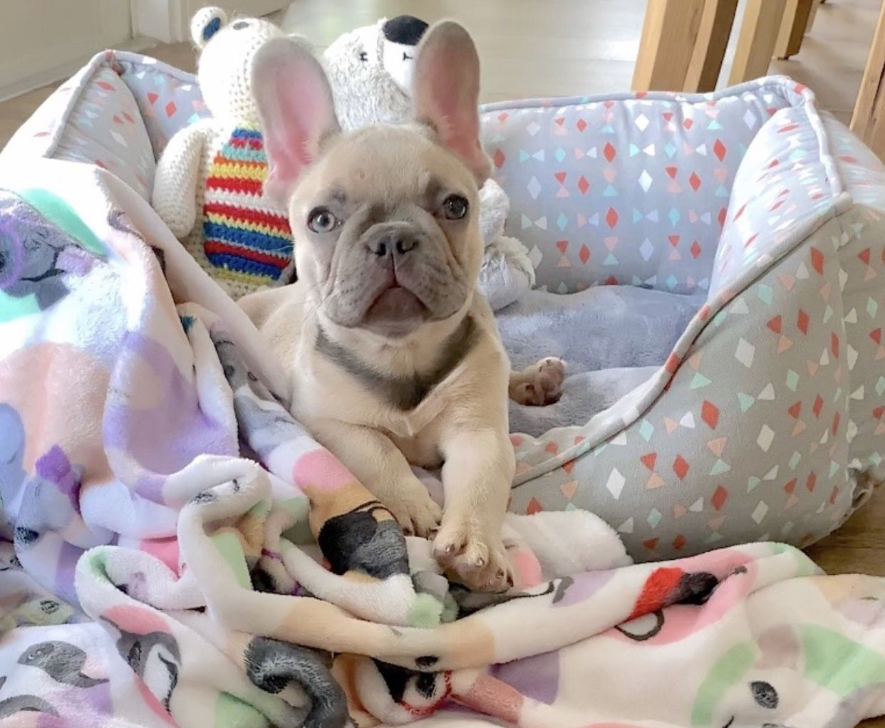 P A R I S Www Poeticfrenchbulldogs Com French Bulldog
