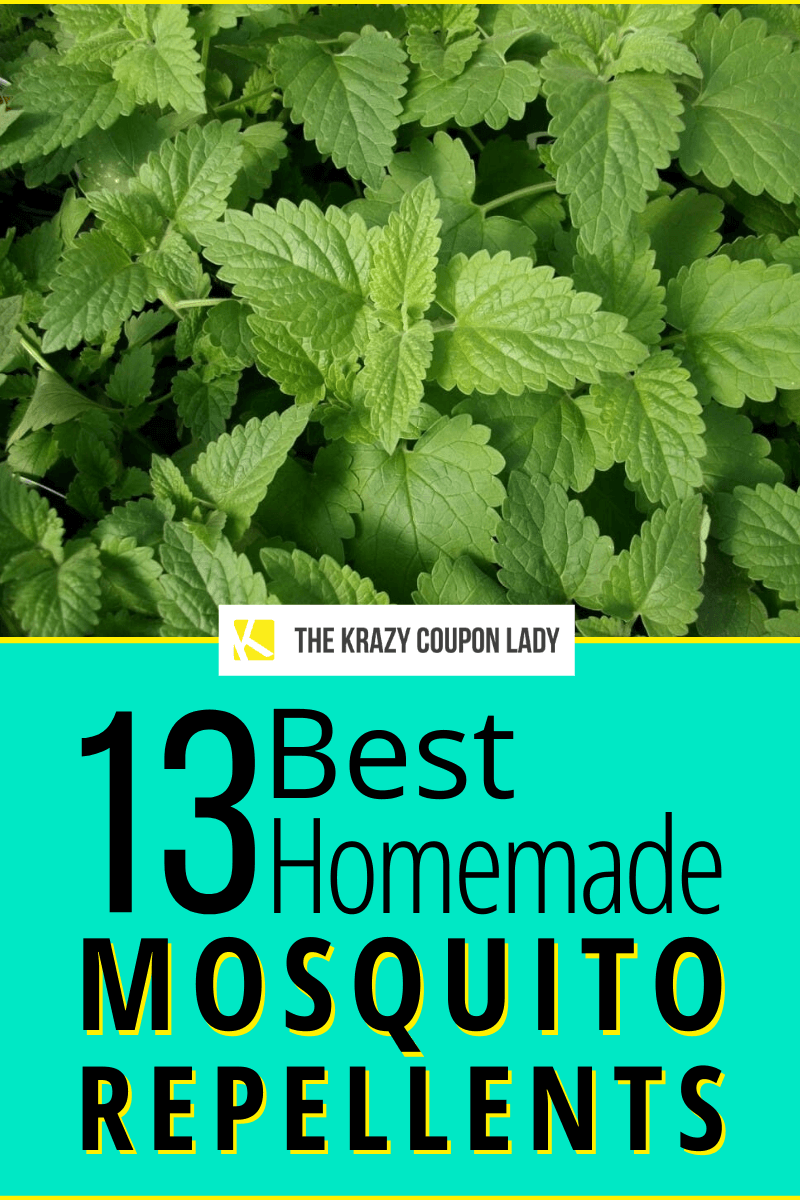 13 Best Homemade Mosquito Repellents In 2020 Mosquito Repellent Homemade Mosquito Repellent Natural Effective Mosquito Repellent,How To Update Laminate Kitchen Cabinets