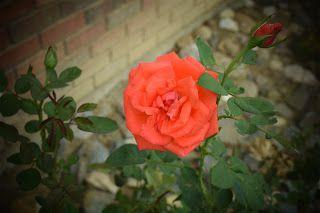 more at blogspot.thebeautyofgodscreation.com