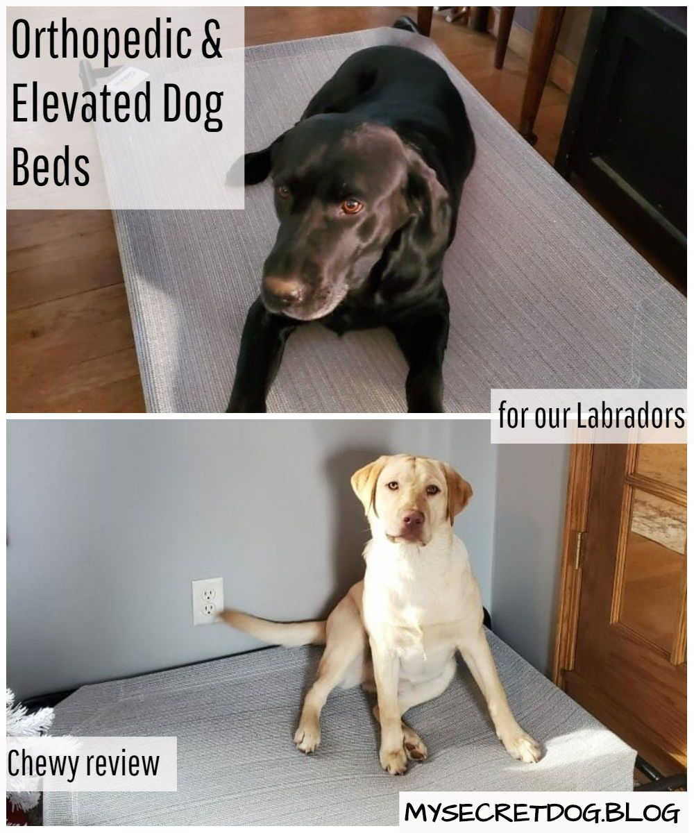 Our Chewy orthopedic and elevated dog bed review. Why you