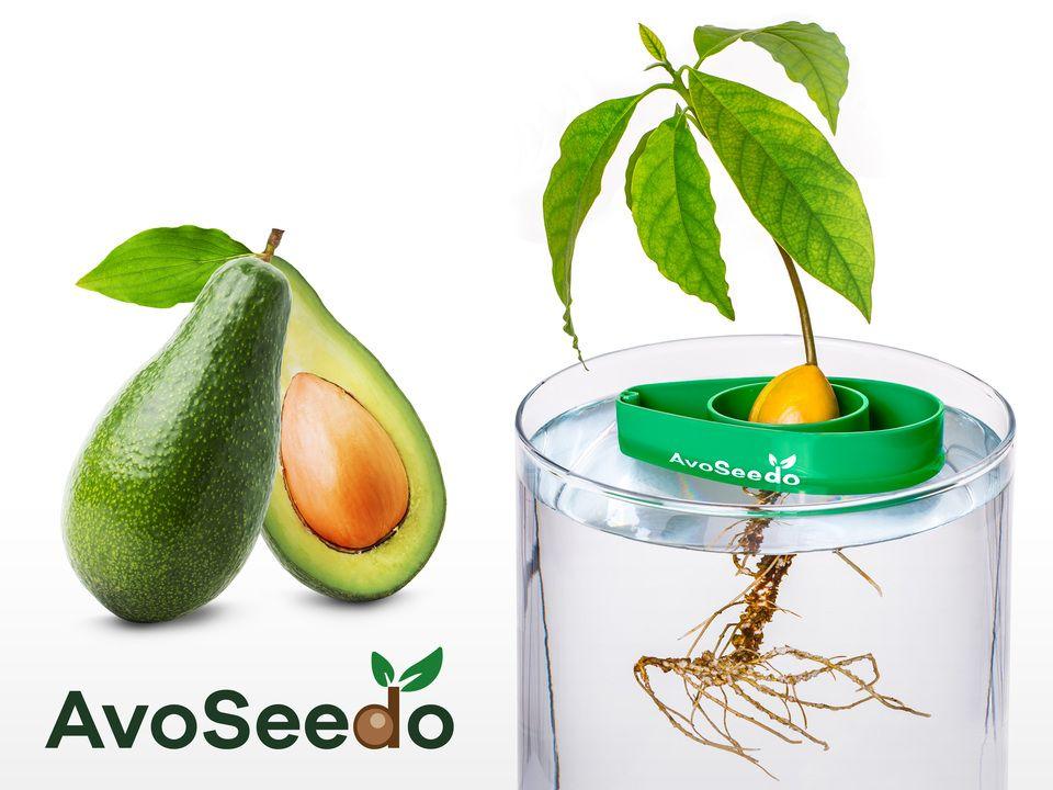 AvoSeedo - dyrk avokado La ikke avokadosteinen gå i søppelet når du lager guacamole – la AvoSeedo hjelpe deg med å dyrke et lite avokadotre i stedet!