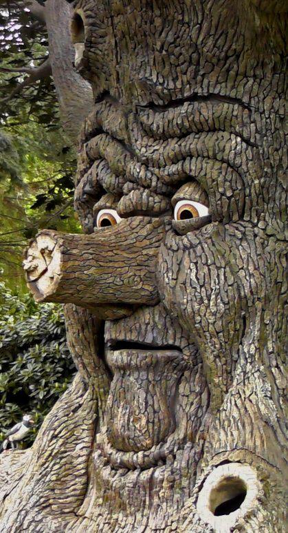 38++ Enchanted tree information