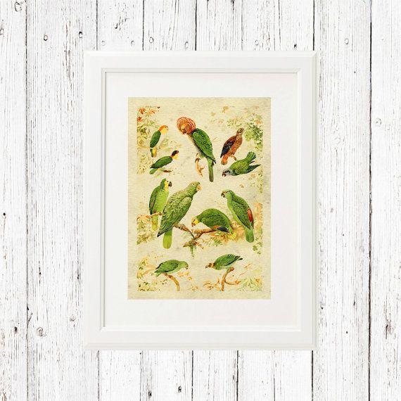 Parrots printable wall art, exotic birds printable wall art ...