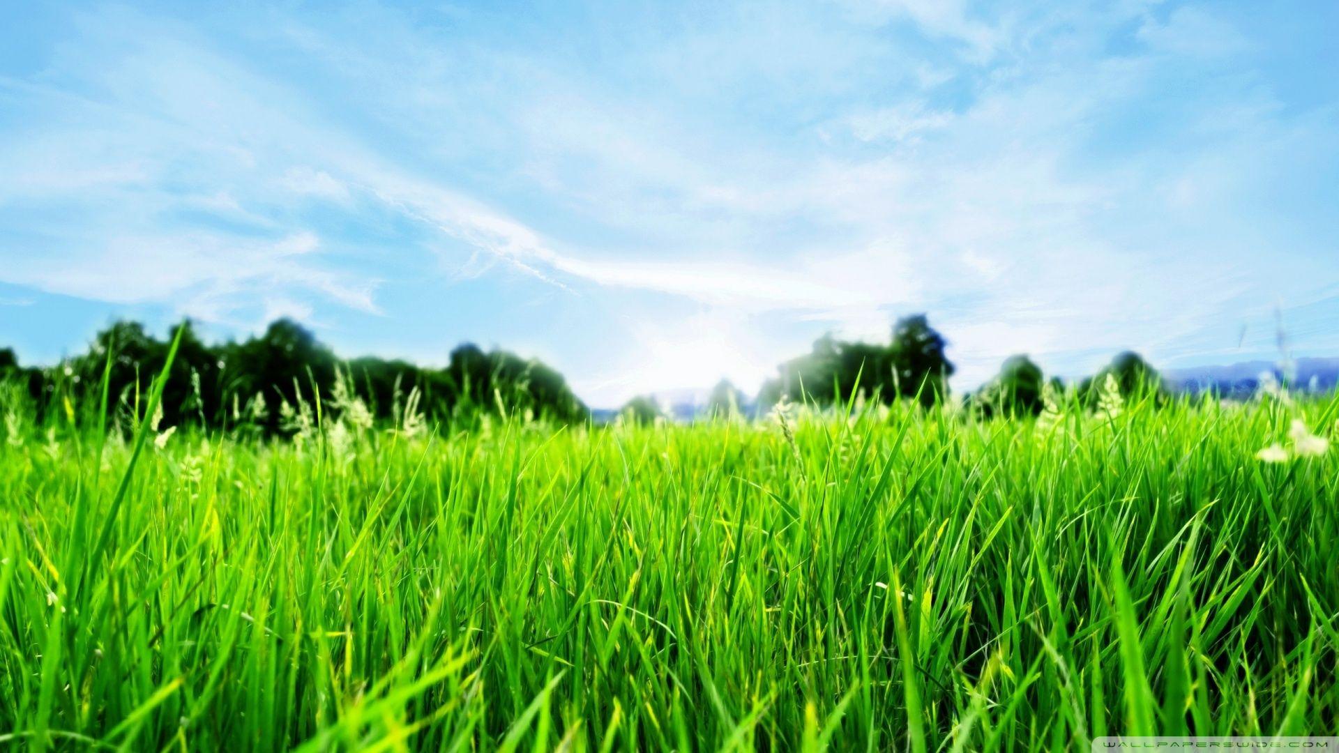 Fresh Green Grass HD desktop wallpaper Widescreen High