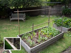 Beat the Heat with a DIY Sunshade Shade cloth garden