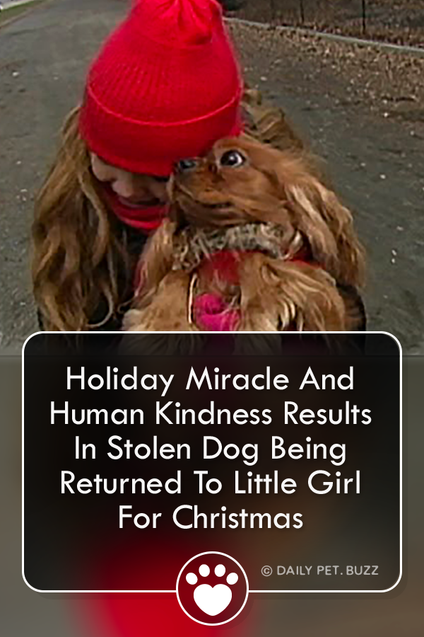 This Little Girl Had Her Dog Stolen From Her. Watch Her Reaction When This Good Samaritan Shows ...