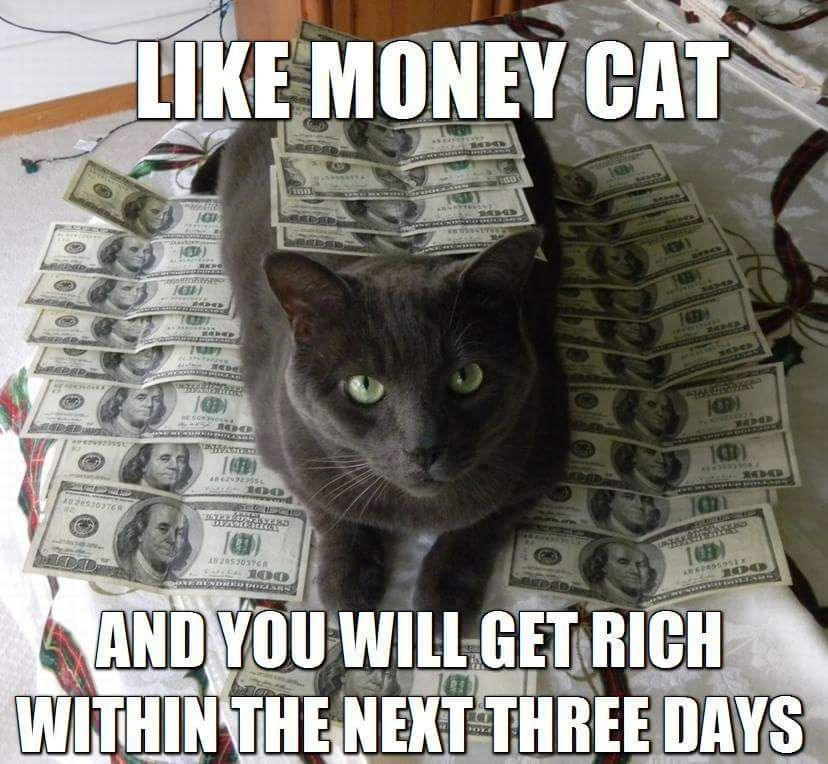 Pin By George Pansy On Cats Legends Money Cat Cats Feline