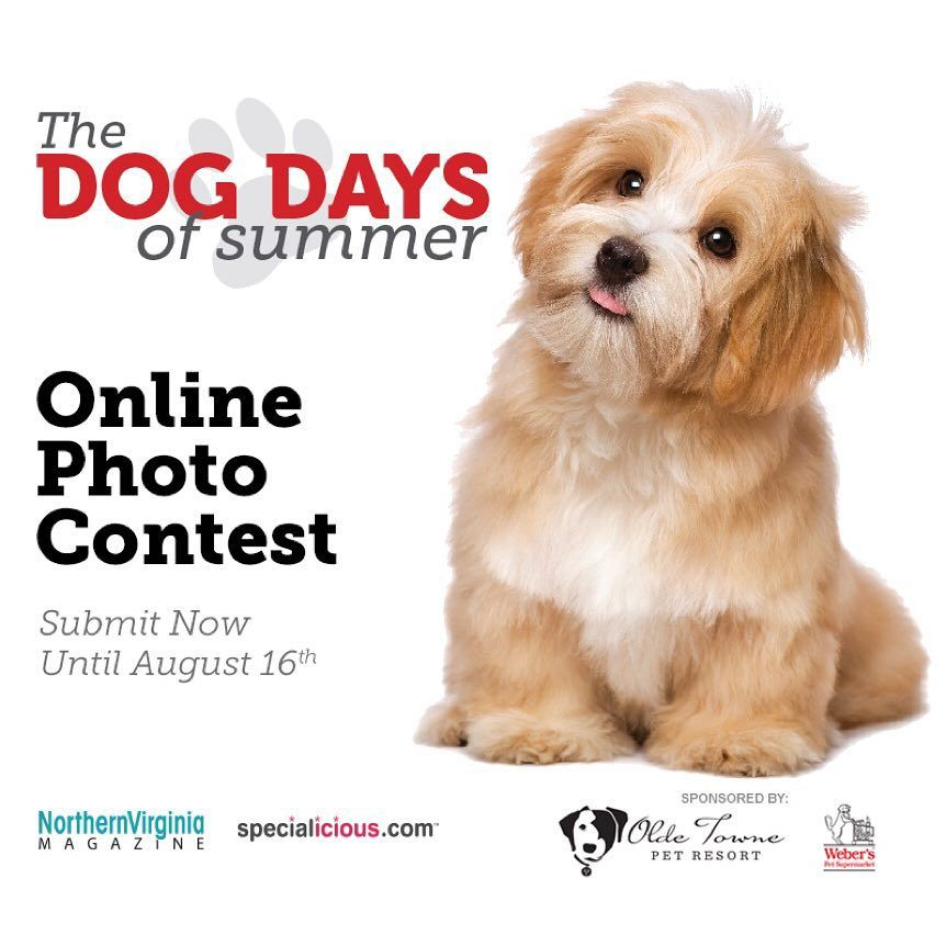 Calling all #DogLovers! Enter your dog in our #DogDaysofSummer Online Photo Contest by midnight on August 16th for a chance to win the title of the #CutestDog in #NoVA, a feature in our magazine and gift prizes from @otpetresorts and Weber's Pet Supermarket! | Don't have a dog? Tag and share with a friend who does! | Link in bio  #DogContest #Pets