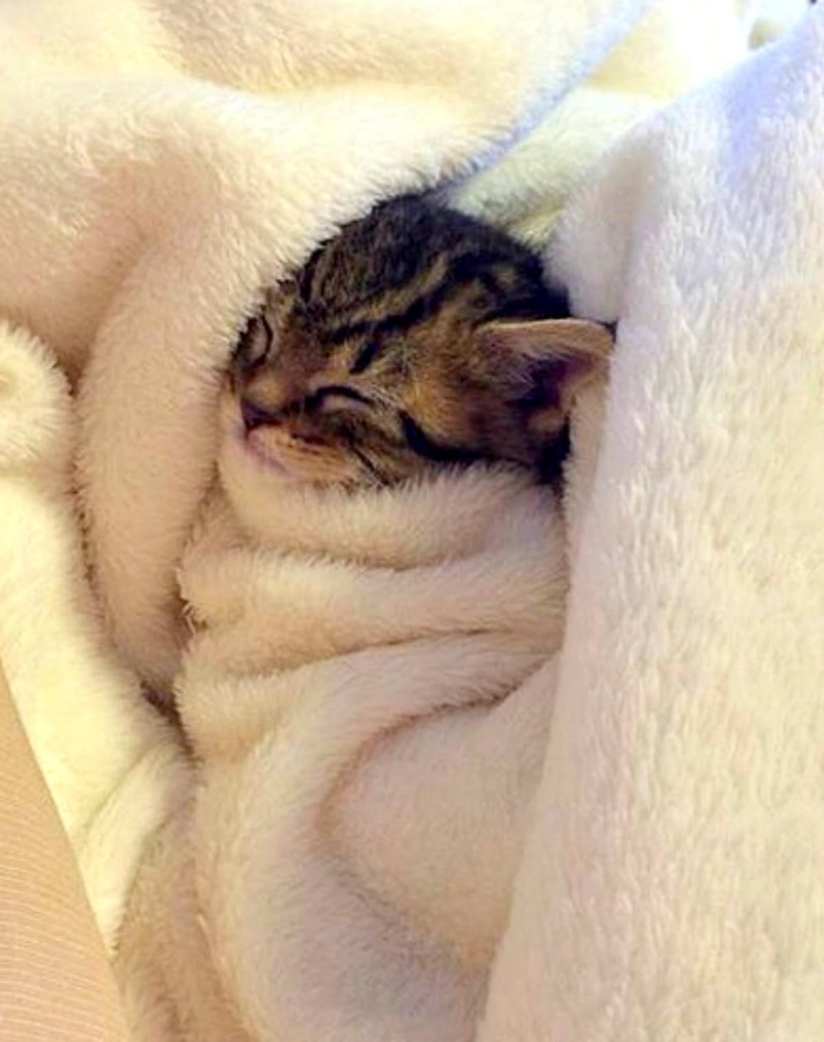 カワイイ猫画像 37 ねこLatte+