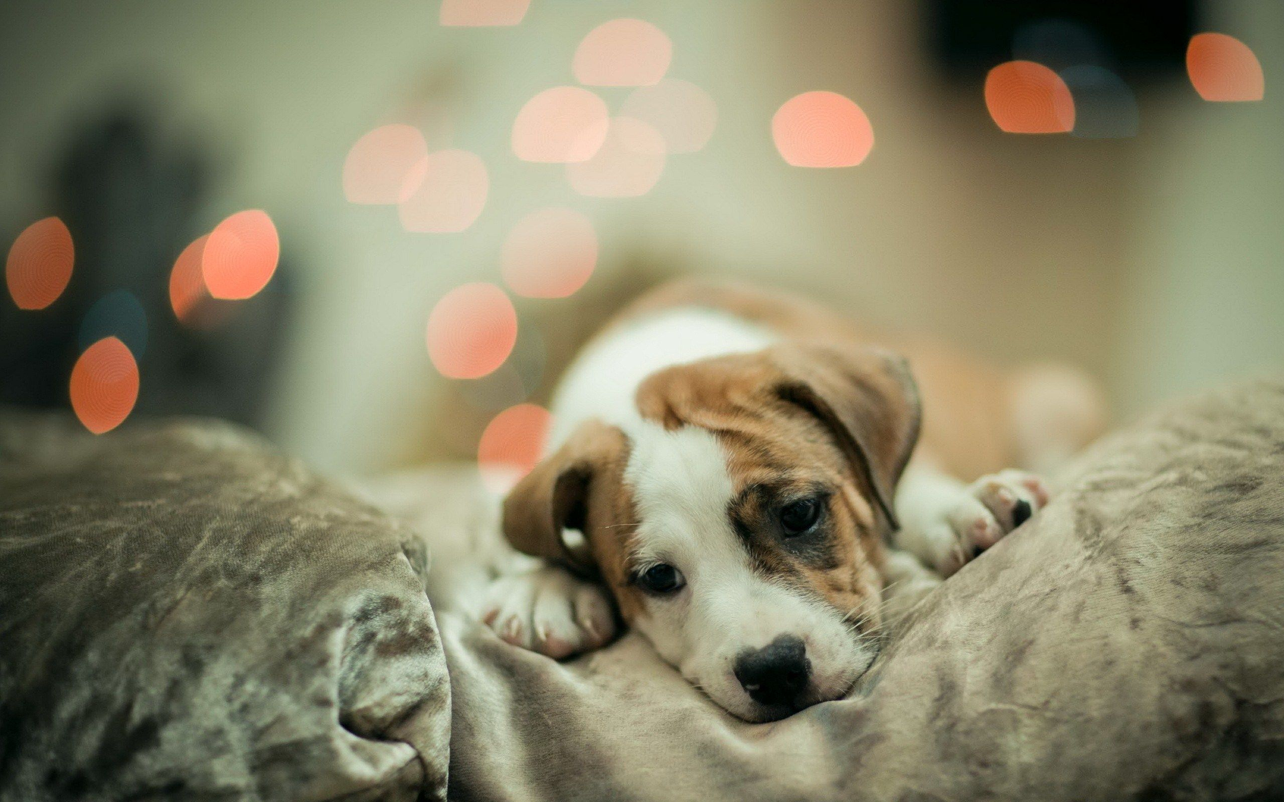 Cute Dogs Wallpapers Some Dogs Like To Sleep In A Cute Dog