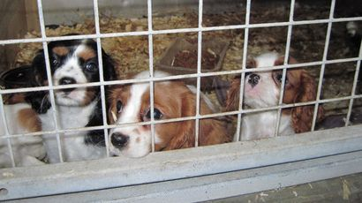 Man Jailed Over Illegal Puppy Farm Where 57 Dogs Were Neglected Puppies Puppy Mills Dogs