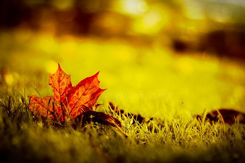 Transitioning your home from Summer to Fall. Our Home Maintenance Checklist.
