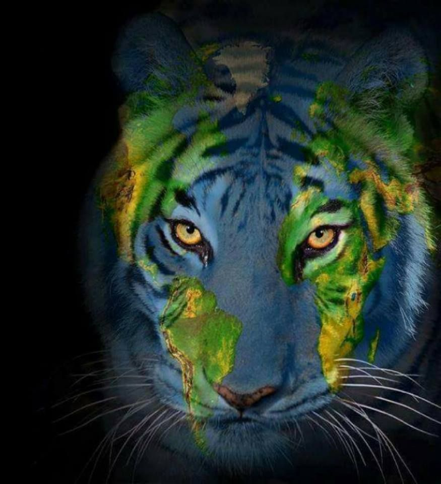 Pin by gwen gwendell parsons on big cats pinterest cat earth day a tiger happy earth world maps big cat rescue big cats art photography animals love gumiabroncs Gallery