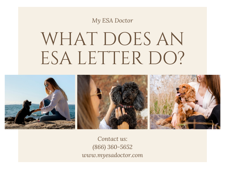 Emotional support animal letter allows you to live & fly