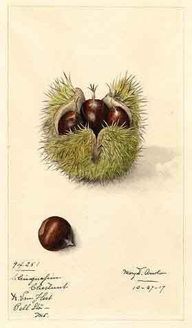 5 Chestnut Recipes From The Past - StrangeAgo