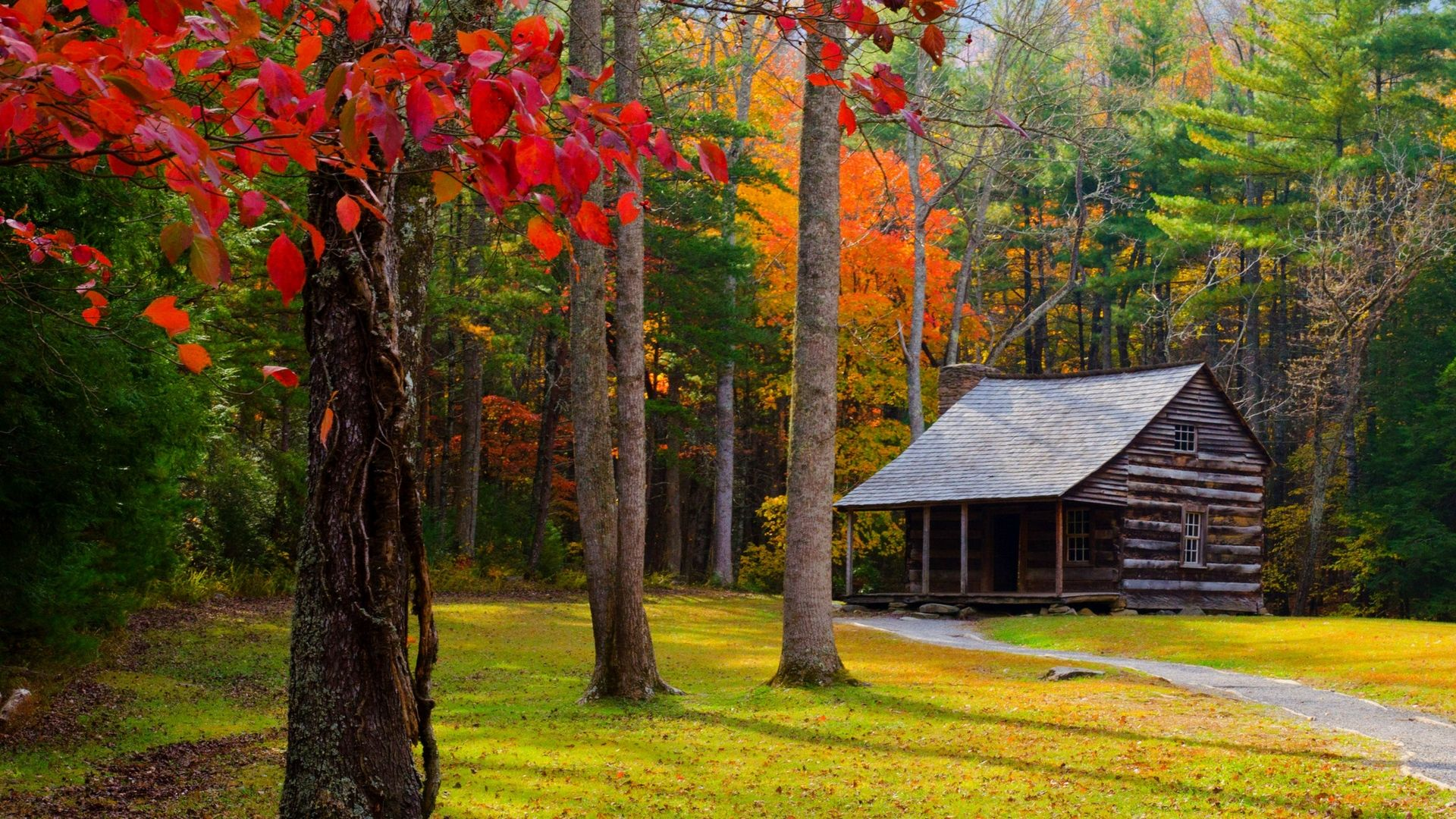 Download Wallpaper 1920x1080 Autumn, Trees, Forest