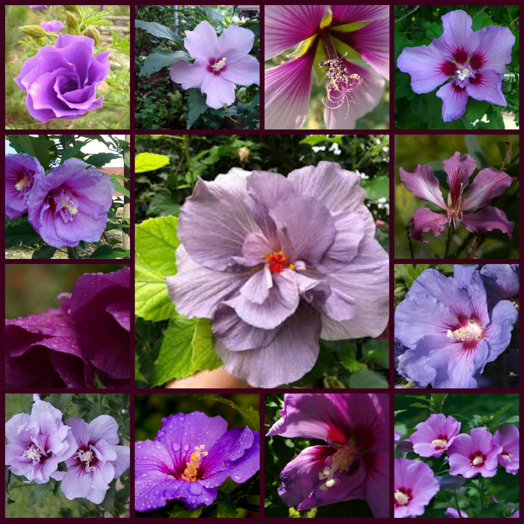 Name All Types Flowers Purple Flowers Types Of Purple Flowers
