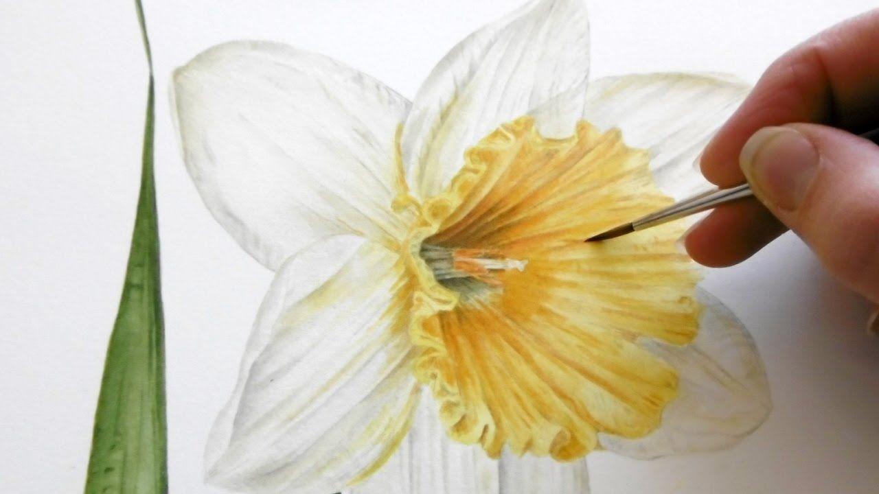 How to paint a bright u vibrant daffodil jarnie godwin art