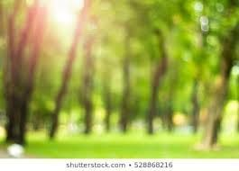Image Result For Garden Blur Background Hd So Your Terrace Becomes A Cozy Place Where You Like To Stay Discover O In 2020 Blurred Background Green Trees Background
